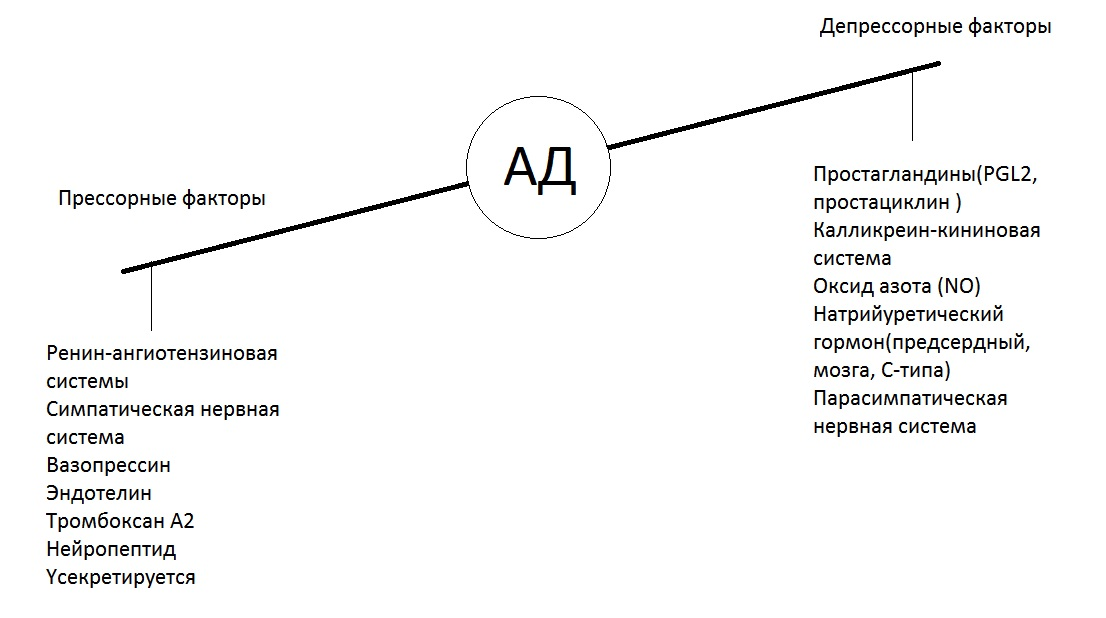 Гуморальные системы регуляции АД