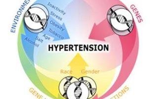 Гипертоническая болезнь. Факторы риска и причины возникновения. Классификация и лечение.