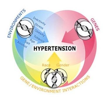 Как формируется гипертоническая болезнь и основная классификация патологии