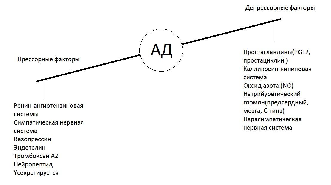Изображение - Поддержания артериального давления Gumoralnye-sistemy-regulyatsii-AD